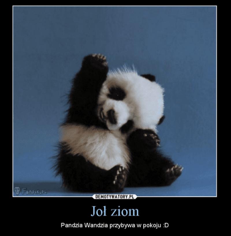 malutka panda w słodkiej pozycji ciała, podpisana Joł ziom, Pandzia Wandzia przybywa w pokoju